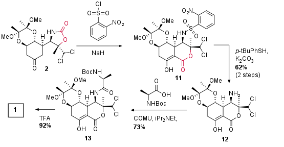 9IZbactobolinA-4.png