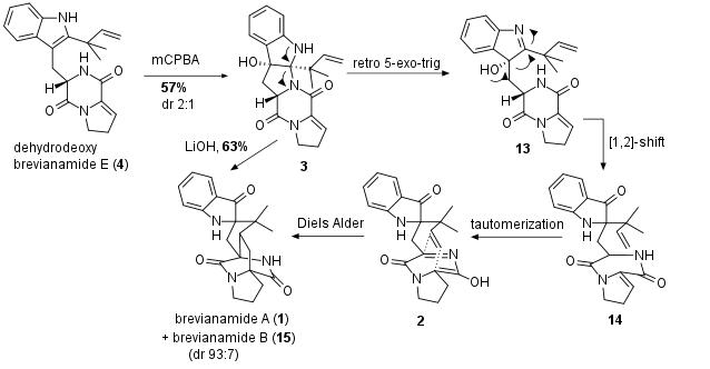 brevianamideA-3.png