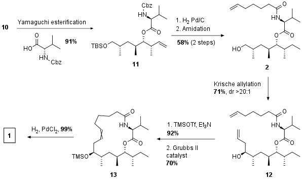 dysoxylactamA-2.png