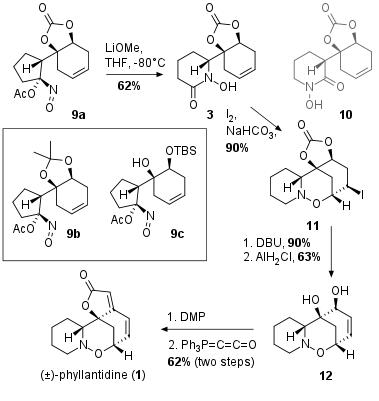 phyllantidine-3.png