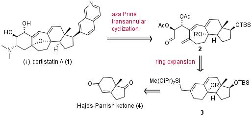 cortistatina-sha-1.png