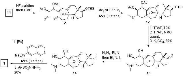 cortistatina-sha-4.png