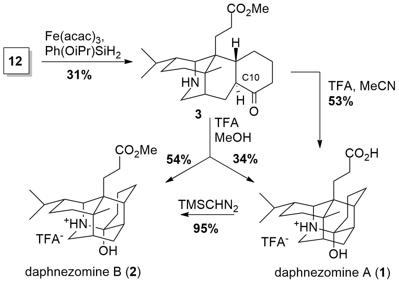 daphnezomine-4.png