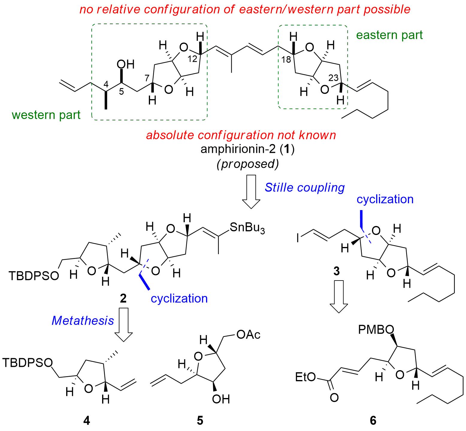 amphirionin2-1.png