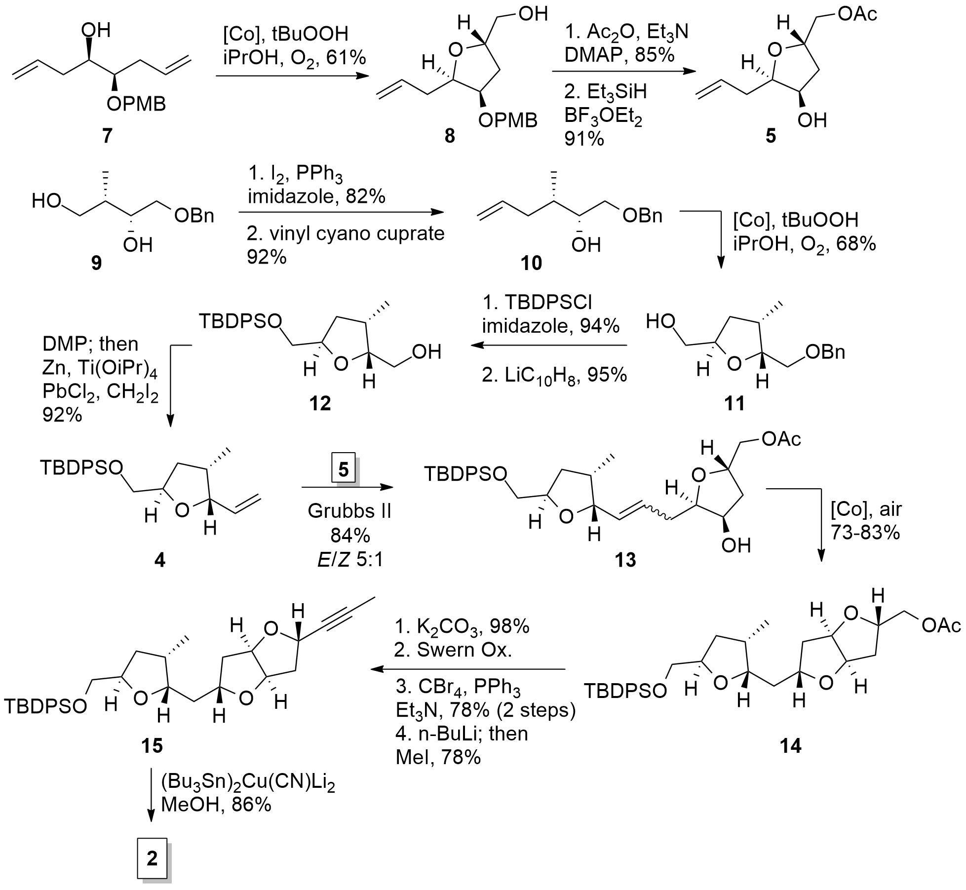 amphirionin2-2.png