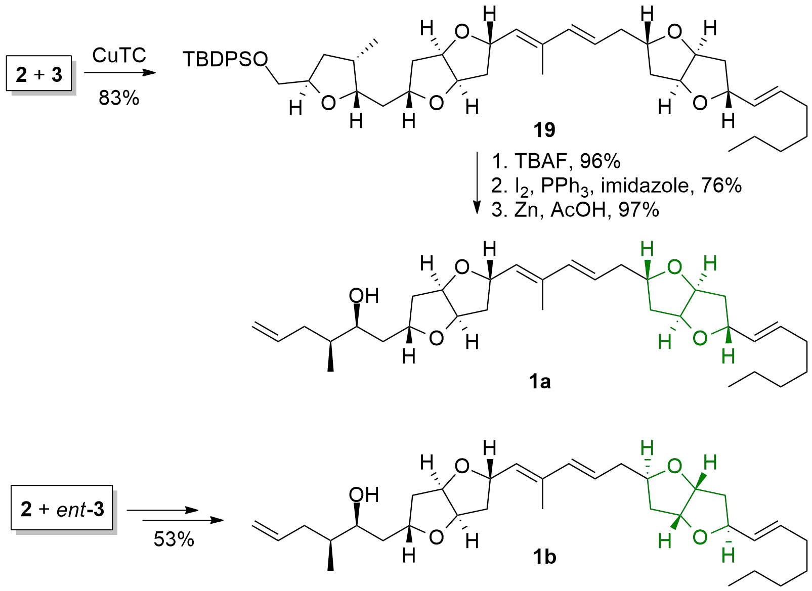 amphirionin2-4.png