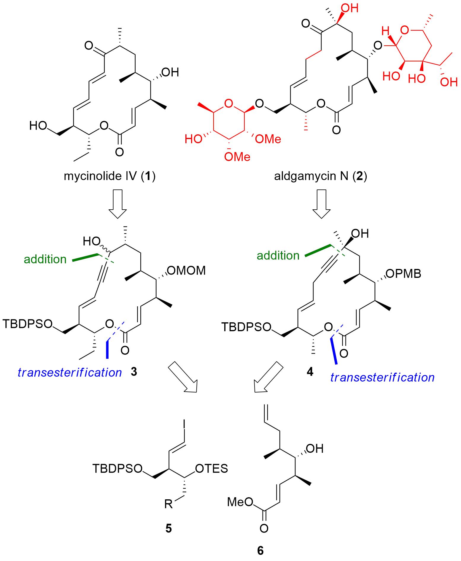mycinolide-1.png
