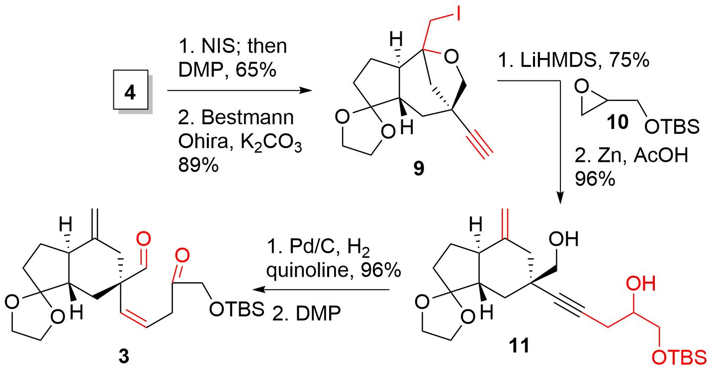 manginoid-3.png